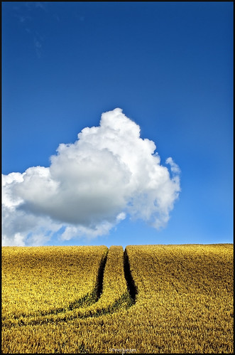 uk summer sky clouds landscape nikon textures wiltshire colorphotoaward cornfieldcloudssummerwiltshiretracksspacecountrysideskyline