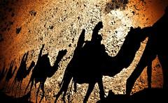 Camels-Caravan - Negev-Desert - Israel
