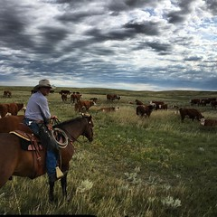 Another day at the office. #ranchlife #Herefords #specialareas #southernalberta