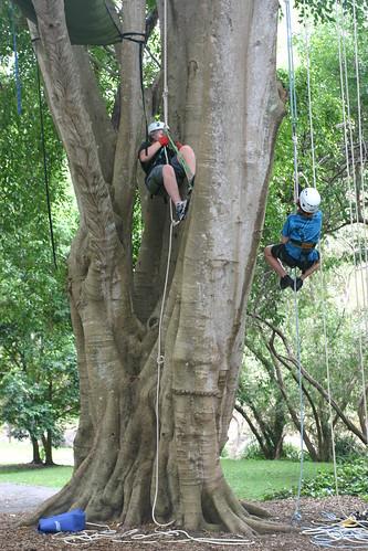 tree climbers 4