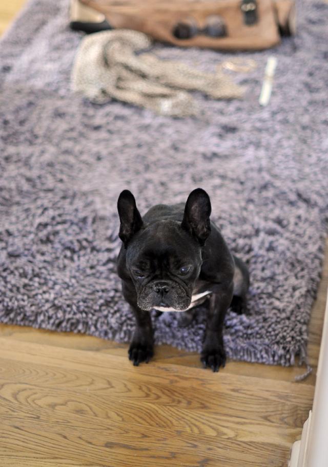 leroy on the rug