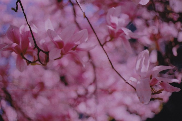 spring16