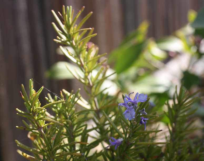 garden friday 04 27 12