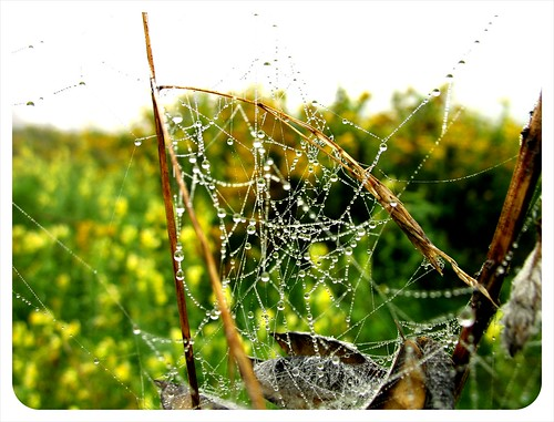 morning spider web