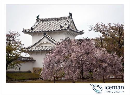 Himeji Castle 285