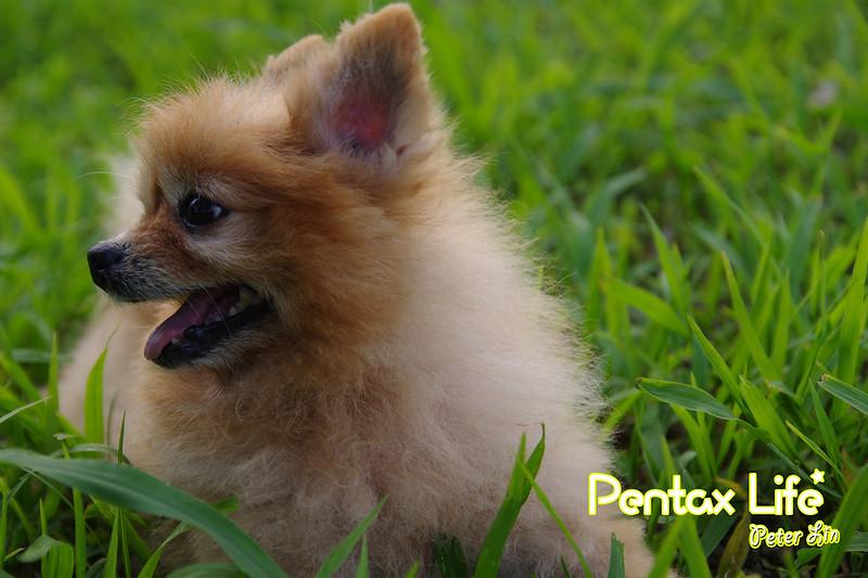 PFC-Pentax Fans Club