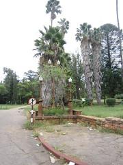 Bulawayo impressions - IMG_0030