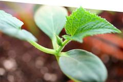 seedlings 046
