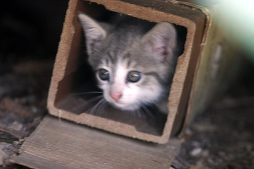 kittens in a box under the deck