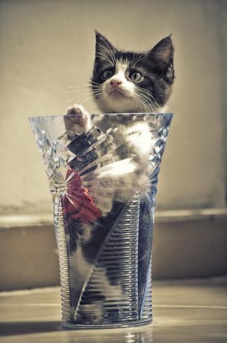 [フリー画像素材] 動物 1, 猫・ネコ, 子猫・小猫, 動物 - 立つ・立ち上がる ID:201206151000