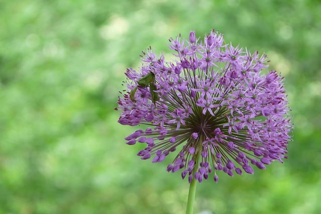 152/366: Florecillas