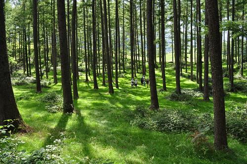 En forêt sur le plateau de Benou, Pyrénées Atlantiques, Aquitaine, France.