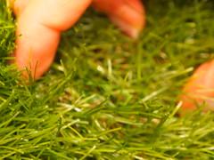 ベルメゾン 人工芝