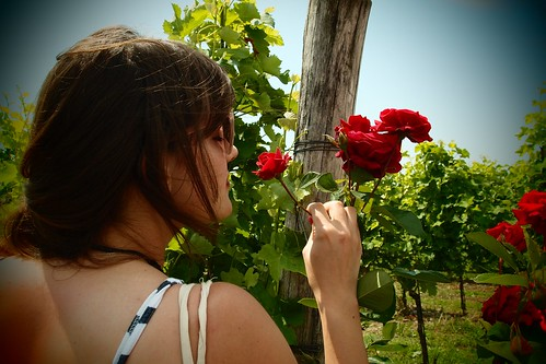 Vin, Mer, Montagne et Vacances : Votre excursion dans le Frioul !