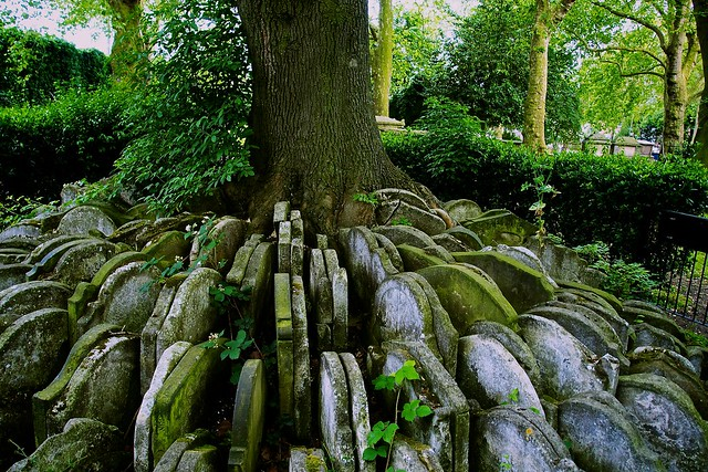 143/366 - The Hardy Tree - St Pancras Old Church