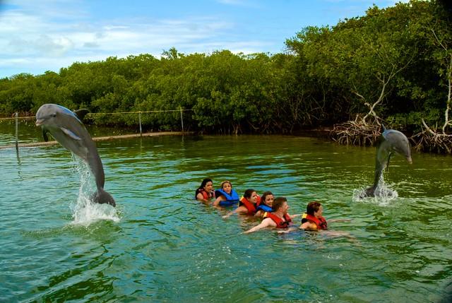 anteketborka.blogspot.com, dauphins8