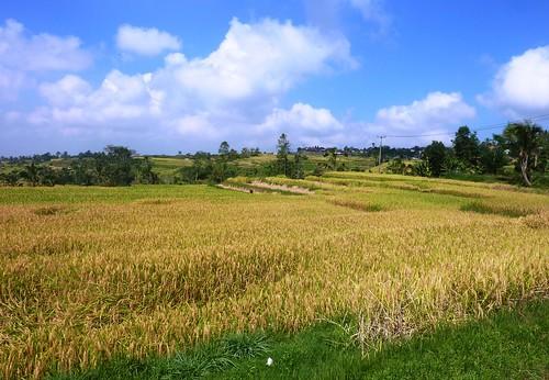 Bali-Route Legian-Jatiluwih (56)
