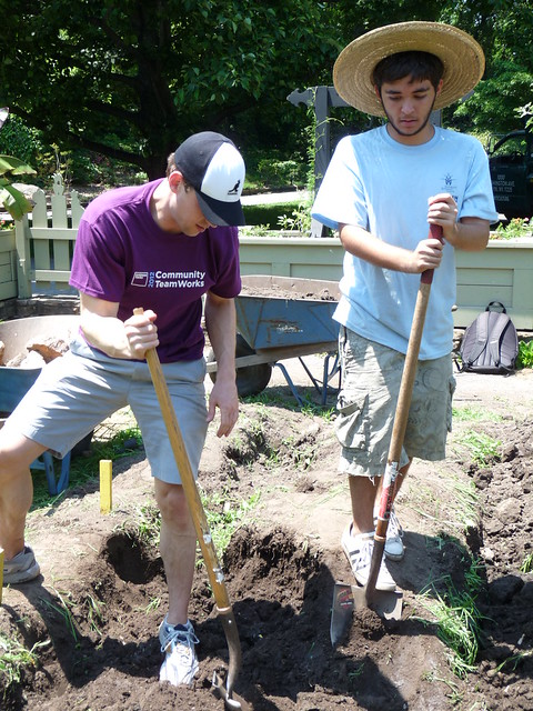 Double-digging team. Photo by Kathryn Littlefield.