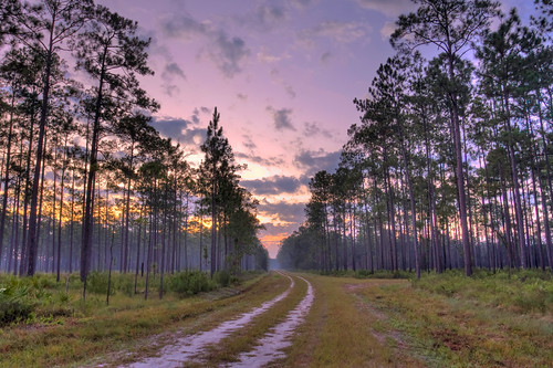 sunrise dawn florida curve pineroad appalachicolanationalforest
