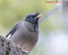 cinclidae(0.0), blackbird(0.0), animal(1.0), fauna(1.0), junco(1.0), close-up(1.0), beak(1.0), bird(1.0), wildlife(1.0),
