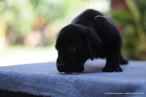 Scaredy Puppy