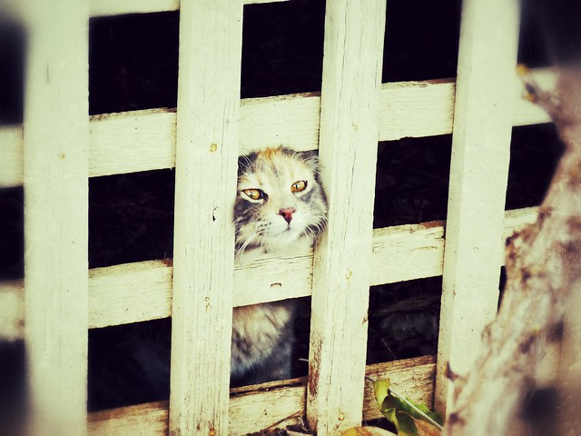 Imprisoned Kitten