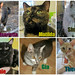 July adoptions by Goathouse Refuge