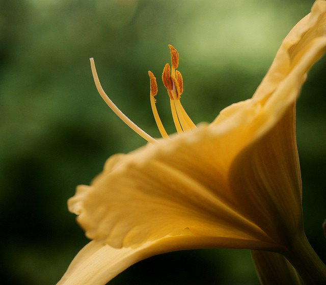 Flower photography inspiration from Jacob Edmiston