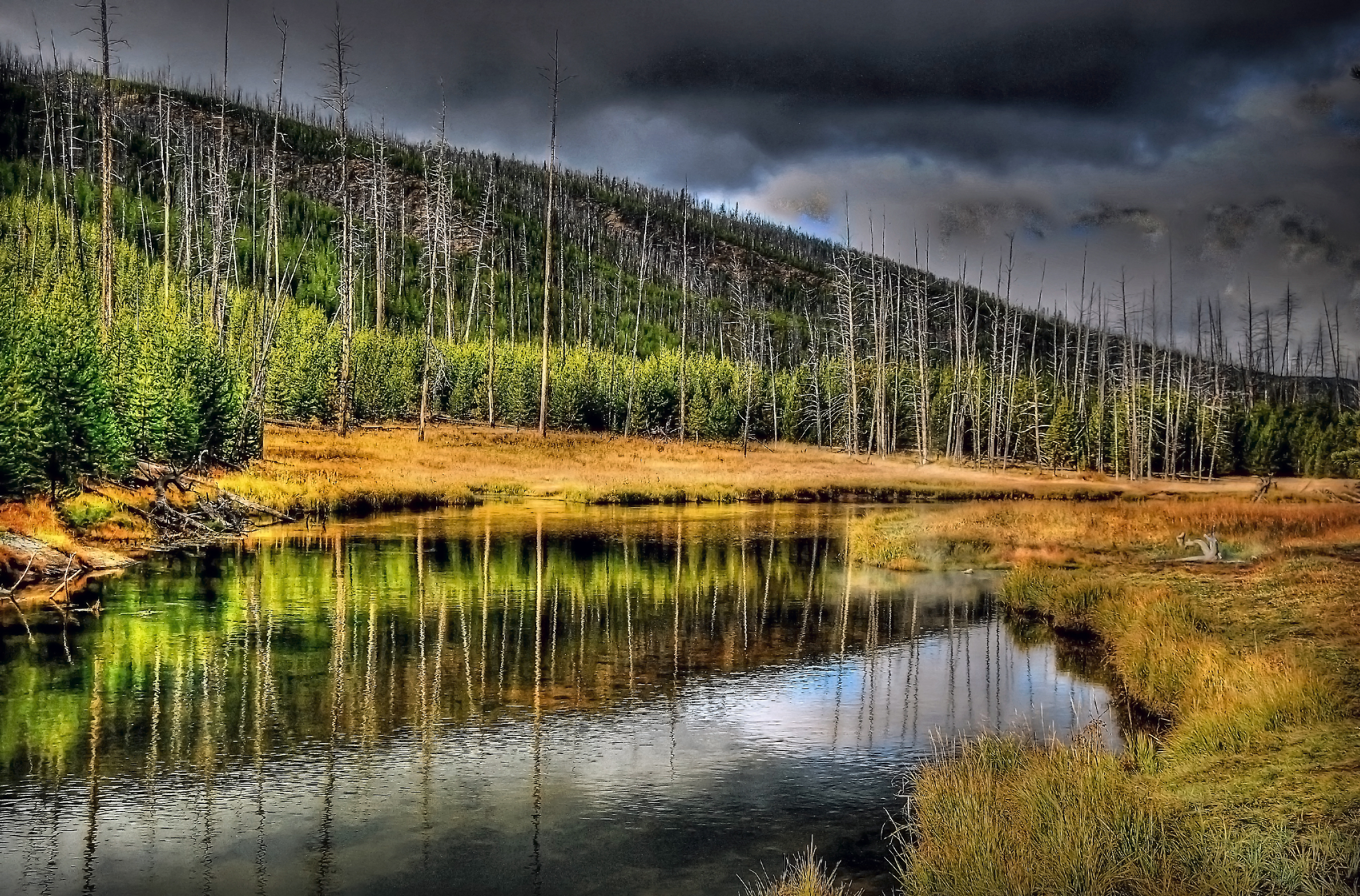 Fly fishing in yellowstone national park get upstream for Yellowstone national park fishing