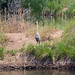 Riverbend Ponds_MIN 325_22