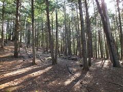 Woods in Readfield