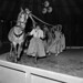 Robert Bros Circus at Welshpool