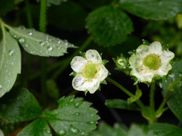 spring garden 010