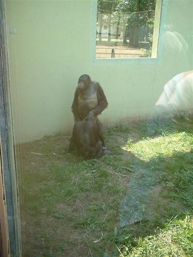 Monkey having sex
