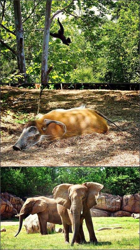 animal blog3
