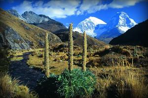flora-parque-nacional-huascaran-ancash-peru