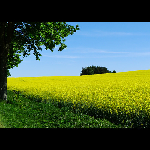 field yellow spring highlands czech czechrepublic bohemia vysočina česko českárepublika vysocina vrchovina ceskomoravska czechmoravian českomoravskávrchovina ceskomoravskavrchovina czechmoravianhighlands