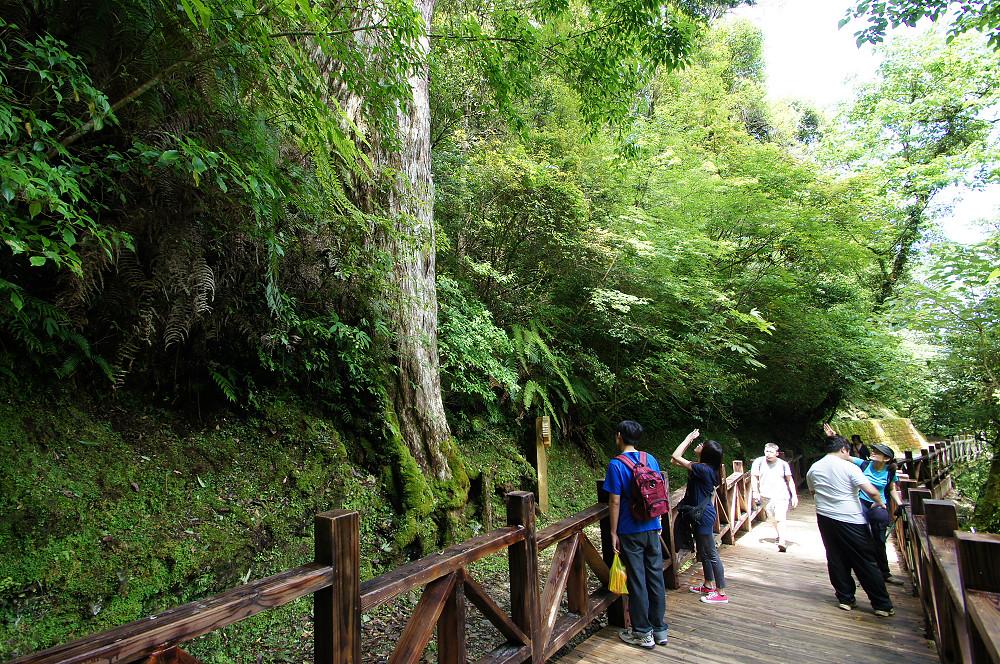 巨木群,與往拉拉山的路上-021