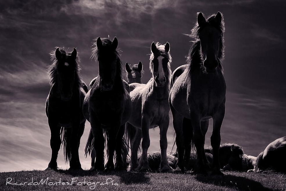 Los caballos de Capiella