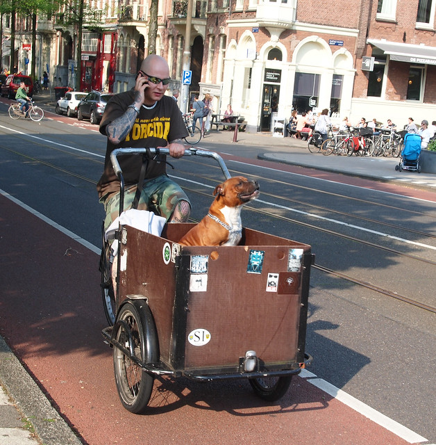 The coolest dog in the street enjoying a cycle in a cargo bike