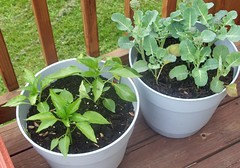 Plants_52112