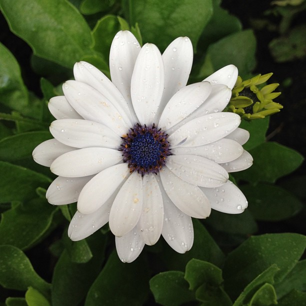 #flower #white #blue #yellow