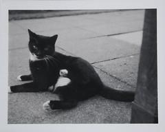 Polaroid 320
