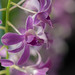 Orchids and Bokeh