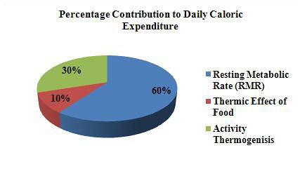 Maintanace_Calories_pie_chart_1
