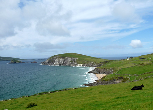 slea head and cow