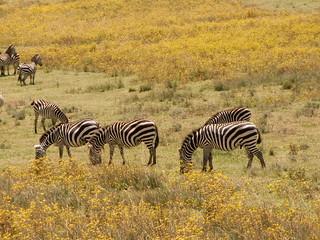 Tanzania - Fieldtrip
