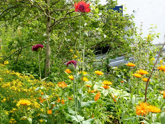 Colourful Garden, Kilmartin House