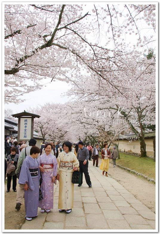 櫻_醍醐寺