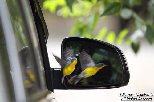 Pássaro Vaidoso by Marcos Nagelstein